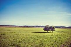 Árboles en campo verde Imagenes de archivo