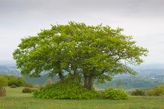 Árboles en campo verde Fotos de archivo