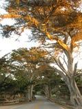 Árboles en Carmel fotografía de archivo