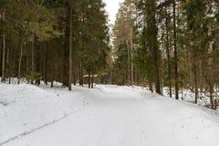 Árboles en carretera nacional de la escarcha Foto de archivo libre de regalías