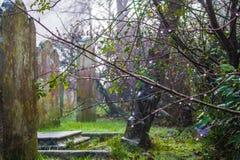 Árboles en cementary Fotografía de archivo