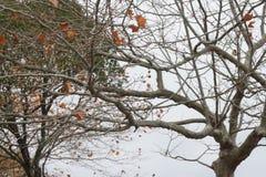 Árboles en cielo Fotos de archivo