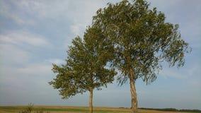 Árboles en cielo Fotografía de archivo