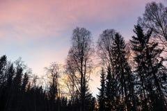 Árboles en cielo rojo en la puesta del sol Foto de archivo