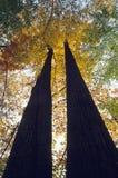 Árboles en color de la caída imagen de archivo libre de regalías