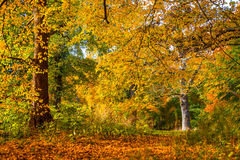 Árboles en colores calientes hermosos Foto de archivo libre de regalías