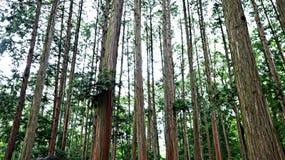 Árboles en Corea del Sur foto de archivo