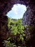 Árboles en cueva imagenes de archivo