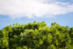 Árboles en Ein Afec Imagenes de archivo