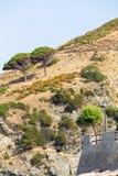 Árboles en el acantilado Imágenes de archivo libres de regalías