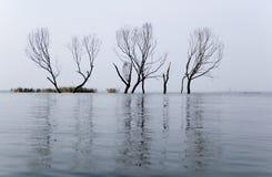 Árboles en el agua Foto de archivo libre de regalías