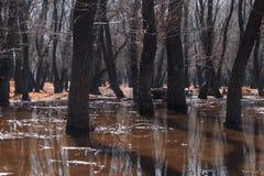 Árboles en el agua Hierba anaranjada Parece otro mundo Imagen de archivo