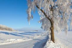 Árboles en el borde de la carretera Fotografía de archivo libre de regalías