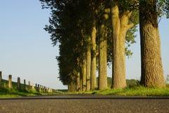 Árboles en el borde de la carretera Fotos de archivo libres de regalías