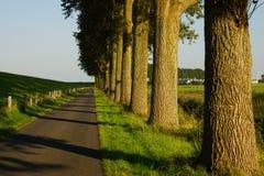Árboles en el borde de la carretera Imagen de archivo libre de regalías