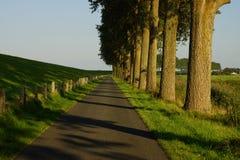 Árboles en el borde de la carretera Fotografía de archivo