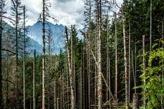 Árboles en el bosque Imagen de archivo