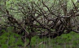 Árboles en el bosque Imagen de archivo libre de regalías