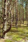Árboles en el bosque Fotos de archivo libres de regalías