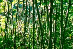 Árboles en el bosque Foto de archivo libre de regalías