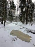 Árboles en el bosque bajo invierno de la nieve Fondo hermoso natural con los árboles helados en invierno Imagen de archivo