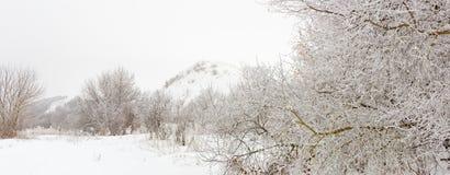 Árboles en el bosque cubierto con helada Imágenes de archivo libres de regalías