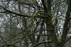 Árboles en el bosque de Grinlow Fotografía de archivo