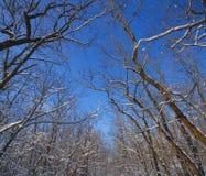 Árboles en el bosque de hojas caducas cubierto con nieve en un día soleado Foto de archivo