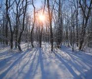Árboles en el bosque de hojas caducas cubierto con nieve en un día soleado Imagen de archivo libre de regalías