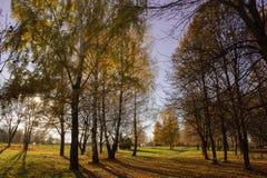 Árboles en el bosque del otoño Imagen de archivo libre de regalías