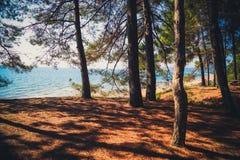 Árboles en el bosque en el mar Imagenes de archivo