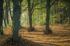 Árboles en el bosque en el otoño en Polonia Foto de archivo