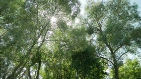 Árboles en el bosque en un día de verano almacen de metraje de vídeo