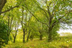 Árboles en el bosque, viaje del verano al parque nacional, árboles verdes y hojas fotos de archivo libres de regalías