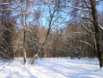 Árboles en el bosque viejo Foto de archivo