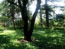 Árboles en el bosque y el parque Imagen de archivo libre de regalías