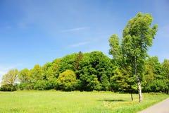 Árboles en el campo Imagen de archivo