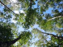 Árboles en el cielo Foto de archivo