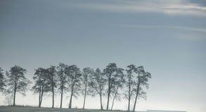 Árboles en el cielo Imágenes de archivo libres de regalías