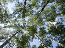 Árboles en el cielo Imagen de archivo