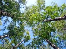 Árboles en el cielo Fotos de archivo libres de regalías