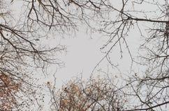 Árboles en el cielo Fotografía de archivo libre de regalías