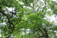 Árboles en el cielo Foto de archivo libre de regalías