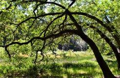 Árboles en el claro Imagen de archivo libre de regalías