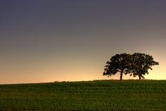 Árboles en el crepúsculo Foto de archivo libre de regalías