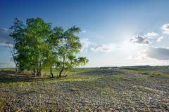 Árboles en el desierto Imagen de archivo