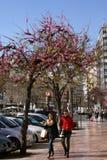 Árboles en el flor que indica la llegada de la primavera a Valencia, España Imagen de archivo