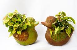Árboles en el florero del pato Imagen de archivo