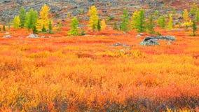 Árboles en el fondo de las montañas 2 Imagen de archivo
