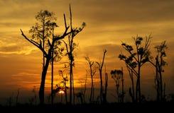 Árboles en el fondo de una puesta del sol hermosa Imágenes de archivo libres de regalías